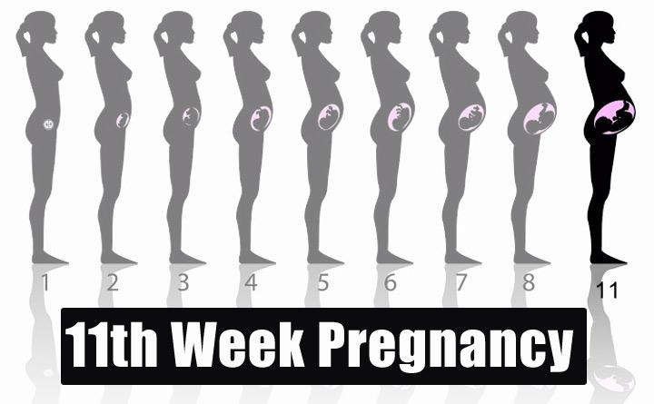 11th Week Pregnancy