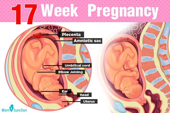 17th Week Pregnancy: Symptoms, Baby Development, Tips And