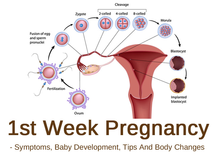 1st Week Pregnancy: Symptoms, Baby Development, Tips And