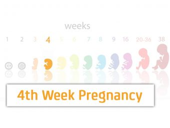 4th Week Pregnancy: Symptoms, Baby Development, Tips And Body Changes