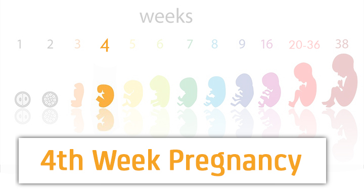 4 Weeks Pregnant: Symptoms, Baby Development, Tips And Body Changes