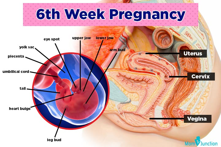 six weeks pregnant