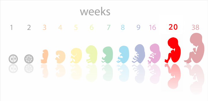 20 weeks pregnant – Symptoms, Baby Development, Tips And Body Changes