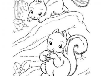 25 Interesting Squirrel Coloring Pages To Keep Your Child Busy