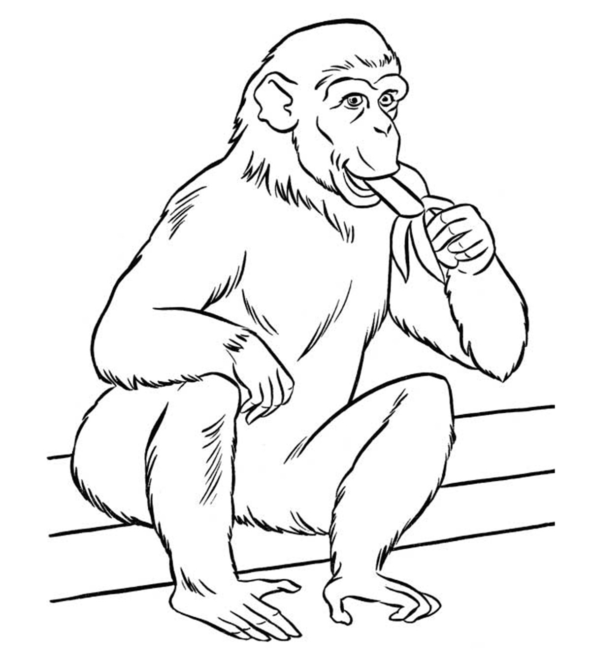 - Top 25 Free Printable Zoo Coloring Pages Online