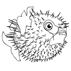 A creatures-fish