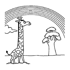 The-Giraffe-Looking-At-Rainbow-16