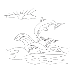 The-Playful-Dolphins-16