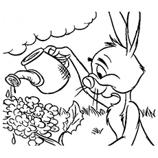 The-Rabbit