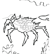 The-crab
