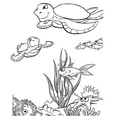 The-sea-turtle