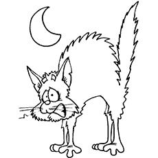 a-scared-cat1