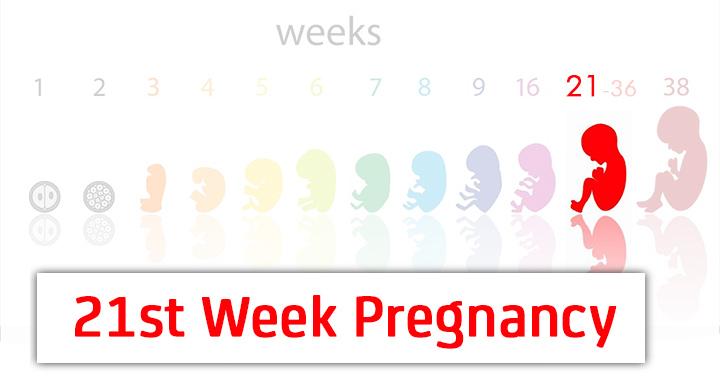 21st week pregnancy