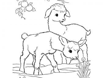 25 Cute Goat Coloring Pages For Your Toddler