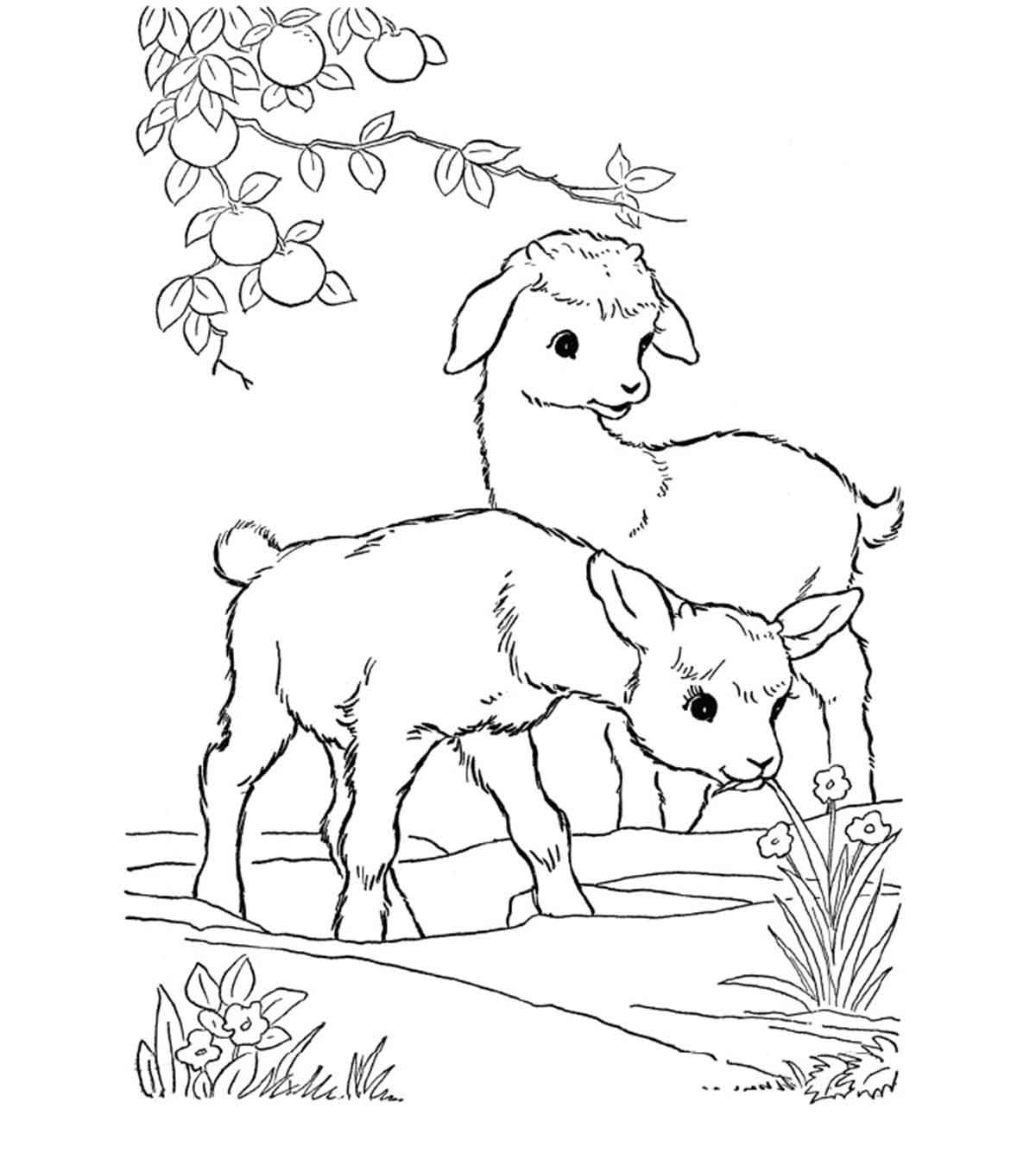 Goats coloring pages | Free Coloring Pages | 1350x1200