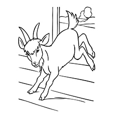 Cute Goat Coloring run Coloring Pages