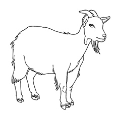 Goat Coloring Pages sta