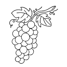 A-Lovely-Grapes-leaf