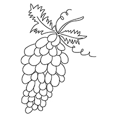 A-Lovely-Grapes-raisin-16