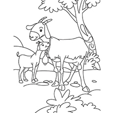 Goat And Kid Coloring Pages