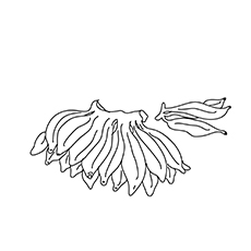 Bananas-Coloring-Pages-16