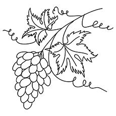 Bunch-of-grapevine-16