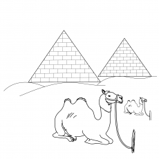 Camel Infront Of Pyramid