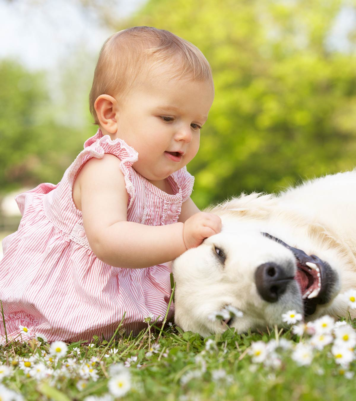 Dog Allergies In Infants - Symptoms, Causes And Treatments