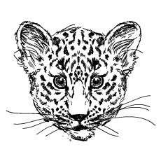 Drawn-Cheetah