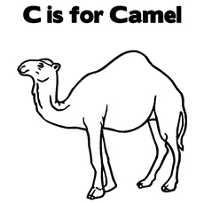 The-'C'-For-Camel
