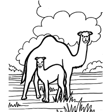 The-Camel-And-Offspring
