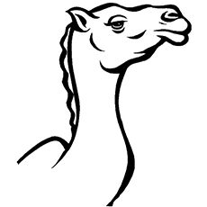 The-Camel-Icon
