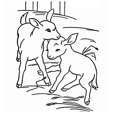 Cute Little Baby Goats In The Farm Coloring Pages