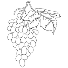 The-grapes-on-vine-color-page
