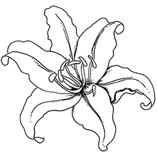 Pretty Lily to Color