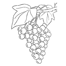 The-single-bunch-of-grapes-color-page