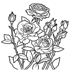 Beautiful Spring Rose to Color
