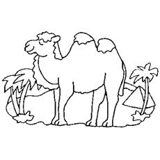 camel-alone