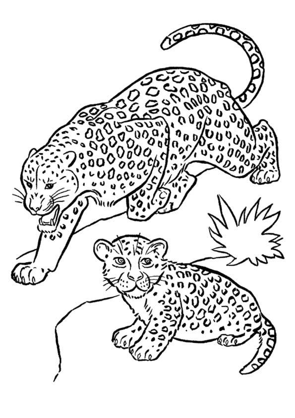 desenho-colorir-felinos