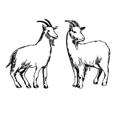 Drawing Goats Coloring Pages