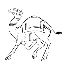 indian-traditional-camel