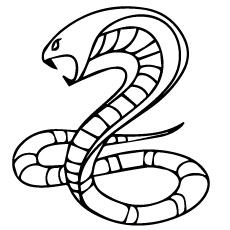 A kobra-snake