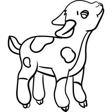 Cute Little Goat