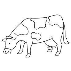 The-Cow-Eating