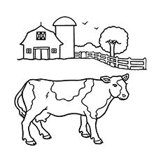 The-Cow-With-Barn-In-The-Background
