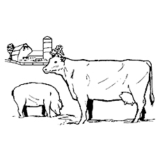 The-Cow-With-Pig