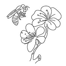 The Flowers And Bees