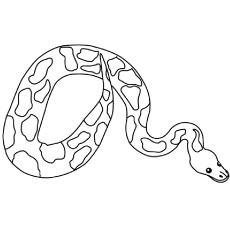 The-anaconda