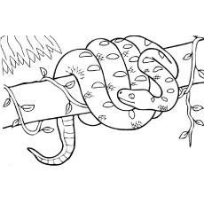 The-boa-constrictor