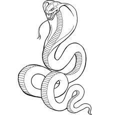 The-king-cobra